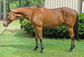 Sold Right Fit Equine Llc